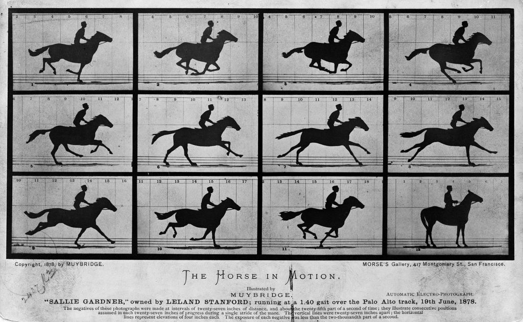 horse in motion time-lapse