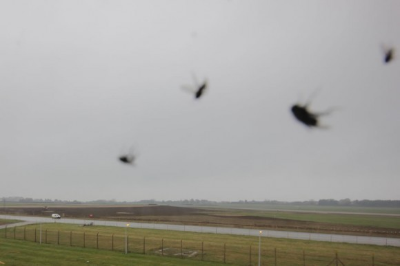 Flies caught in a web on one of our camera systems