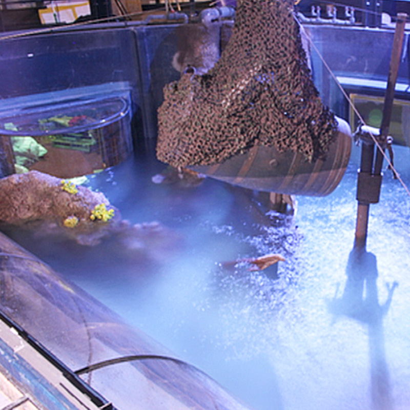 Sea Life Centres – Sharkbait Reef construction