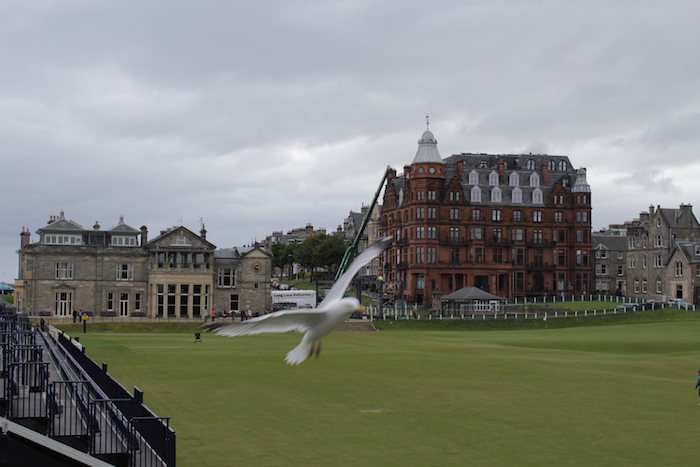 Seagull flying past camera on St Andrews Links