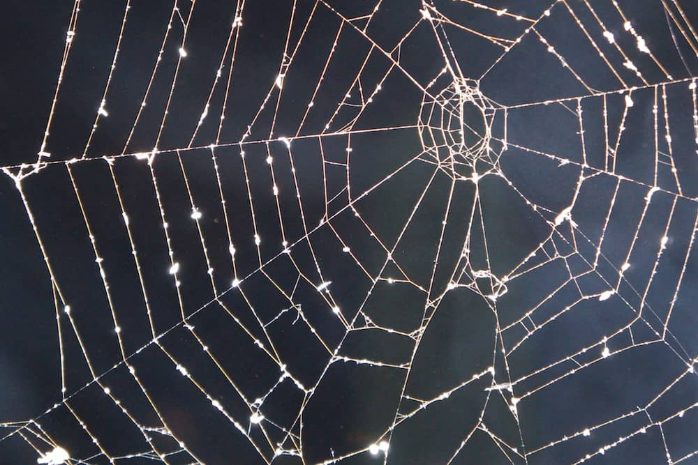Spider's web in the sun
