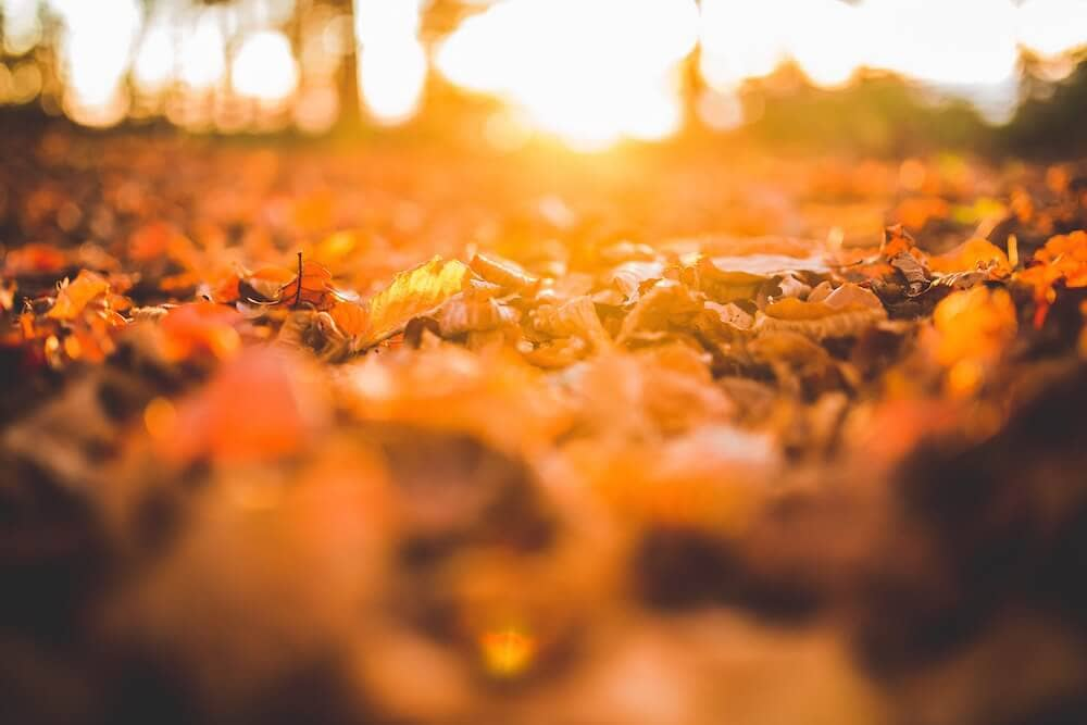 Sunlight over fallen autumn leaves.