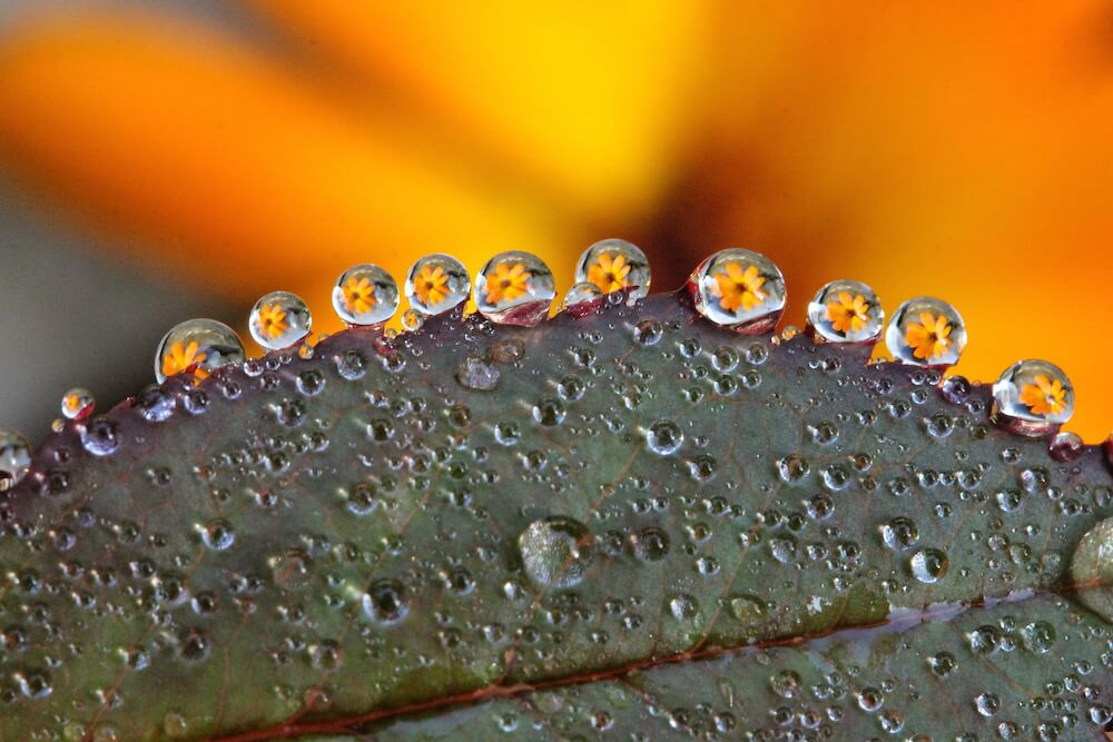 Macro shot of dew drops caught on a leaf.