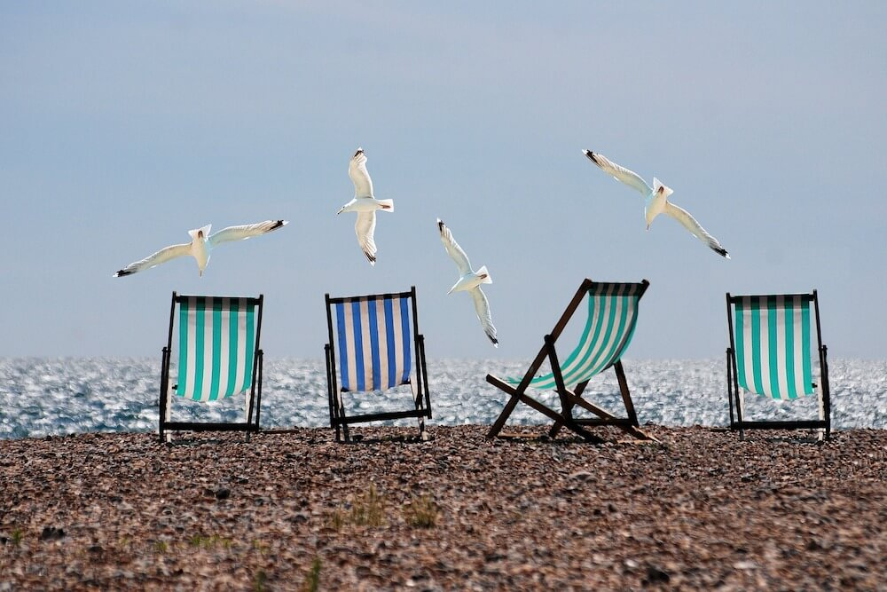 Deck chairs and seagulls at the beach.