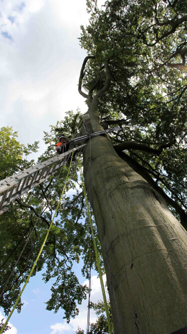 Installing a time-lapse camera system in a tree.