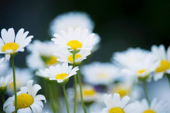 Selected focus photograph of white petal flowers.